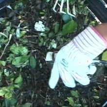 Home Composting: It's Second Nature! (Part III)